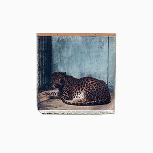 Vintage Wall Chart Leopard, 1916