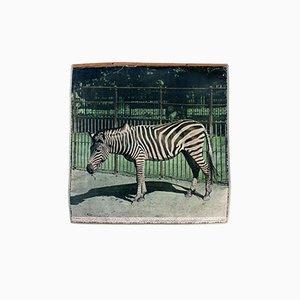 Vintage Wall Chart Zebra, 1917