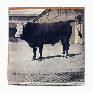 Vintage Wall Chart Beef, 1913