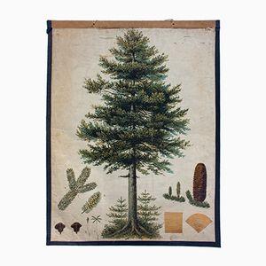 Antique Wall Chart Fir Tree by Th. Bannwarth for Gerold & Sohn, 1879