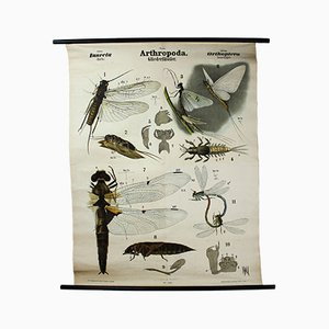 Antique Wall Chart Insects by Rudolf Leuckart, 1879