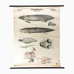 Antique Wall Chart Vertebrates by Rudolf Leuckart, 1879