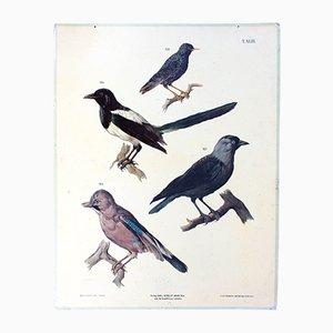 Antike Vögel Wandkarte von A. Gerasch für Carl Gerold's Sohn, 1886