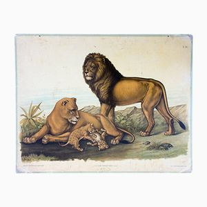 Lion Family School Wall Chart from Carl Gerold's Sohn, 1886
