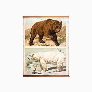 Antique Wall Chart Bears by Th. Breidwiser for Carl Gerold´s Sohn, 1886
