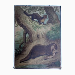 Marten Wall Chart by Friedrich Specht for F. E. Wachsmuth, 1878