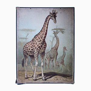 Wall Chart Giraffe by Friedrich Specht for F. E. Wachsmuth, 1878