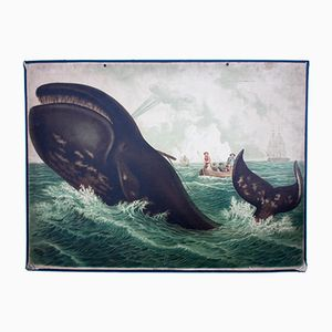 Whale Wall Chart by Friedrich Specht for F. E. Wachsmuth, 1878