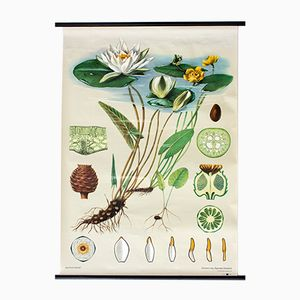 Water Lily Wall Chart by Jung-Koch-Quentell for Hagemann, 1972
