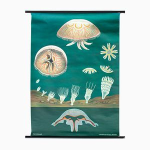 Vintage Austrian Jellyfish Wall Chart by Jung, Koch and Quentell, 1971