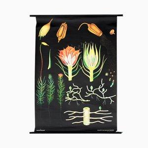 Affiche Murale avec Illustration de la Faune et de la Flore par Jung, Koch & Quentell pour Hagemann, Autriche, 1972