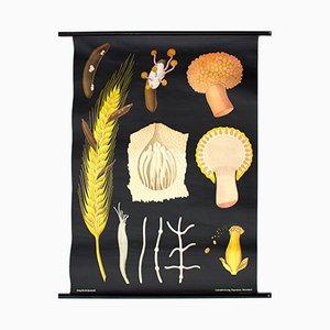Affiche Murale d'une Germe de Blé par Jung-Koch-Quentell pour Hagemann, 1961