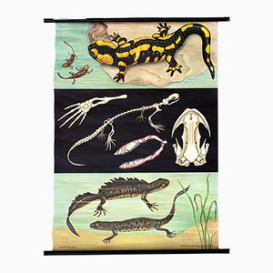 Vintage Wall Chart Salamander by Jung, Koch and Quentell, 1970