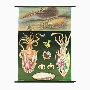 Vintage Wall Chart Octopus by Jung, Koch, Quentell, 1967