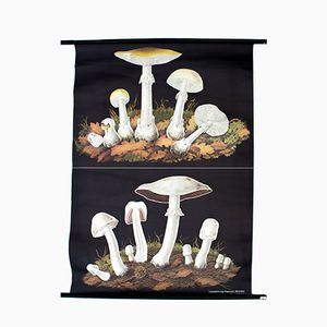 Vintage Wall Chart Mushrooms by Jung, Koch and Quentell, 1970