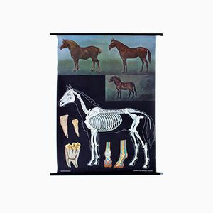 Vintage Wall Chart Horse by Jung, Koch and Quentell, 1972