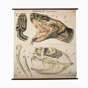 Affiche Murale Vipère par Paul Pfurtscheller, 1926