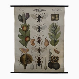 Antique German Anthropoda Wall Chart by Leuckart, Nitsche & Chun for Theodor G. Fischer & Co, 1885