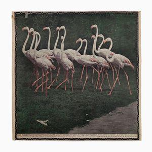Austrian Photochromic Flamingo Wall Chart, 1920s