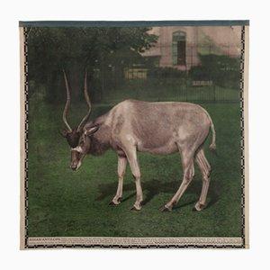 Affiche Murale Vintage d'une Antilope, 1920s
