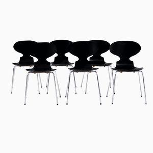 3100 Stühle von Arne Jacobsen für Fritz Hansen, 1971, 6er Set