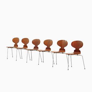 Dänische Mid-Century Ant Stühle von Arne Jacobsen für Fritz Hansen, 1950er, 6er Set