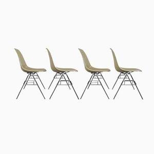 Mid-Century DSS Fiberglas Stühle von Charles & Ray Eames für Herman Miller, 4er Set