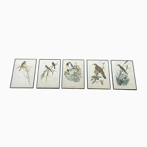 Bird Prints, 1950s, Set of 5
