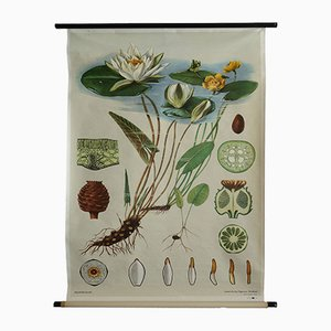 Vintage Water Lily Wall Poster by Jung-Koch-Quentell