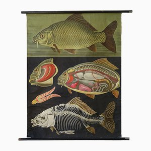 Vintage Carp Wall Poster by Jung-Koch-Quentell