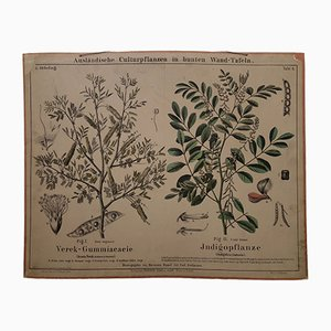 Antique Gum Arabic Tree & Indigo Wall Chart, 1870s