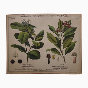 Antique Allspice & Clove Wall Chart, 1870s