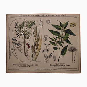 Antique Rotang & Jute Wall Chart, 1870s