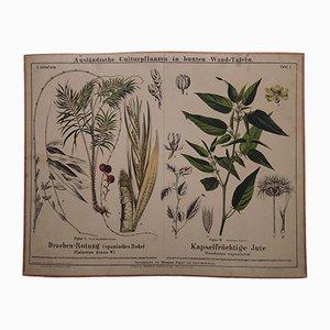 Stampa antica raffigurante pianta di juta e rotanga, metà XIX secolo
