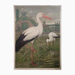 Antike Zoologische Wandkarte Storch