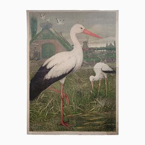 Antique Zoological Wall Chart Stork