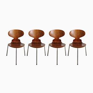Modell 3100 Ant Stühle von Arne Jacobsen für Fritz Hansen, 4er Set