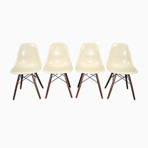 Vintage DSW Stühle aus Pergament von Charles & Ray Eames für Herman Miller, 1960er, 4er Set