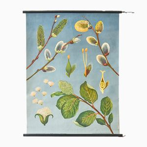 Pussy Willow Wall Poster by Jung Koch Quentell for Hagemann