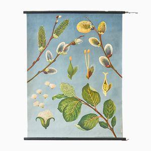 Weidenkätzchen Wandbild von Jung Koch Quentell für Hagemann