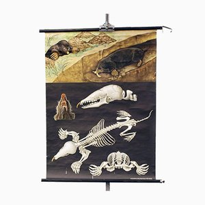 Vintage School Wall Hanging with Flora and Fauna & Mole from Lehrmittelverlag Hagemann