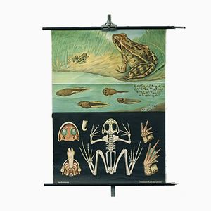 Vintage School Wall Hanging with Flora and Fauna & Grass Frog from Lehrmittelverlag Hagemann