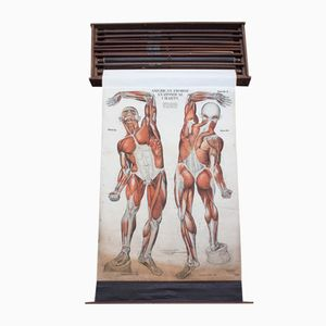 American Anatomical Wall Charts by Fritz Frohse for Nystrom, 1918, Set of 9