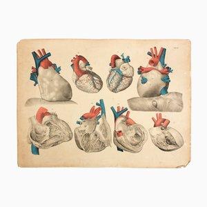 Affiche Educative Cœur par M.J. Weber, 1830