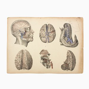 Brain Educational Chart by M. J. Weber, 1830