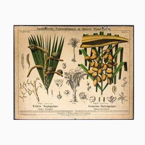 Schulwandkarte mit Sagopalme und Dattelpalme von Hermann Zippel und Carl Bollmann, 1877