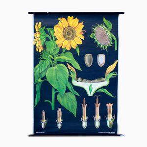 Affiche Murale Sunflower par Jung, Koch et Quentell pour Hagemann, 1973