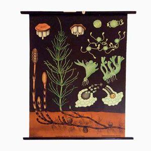 Affiche Murale Field Horsetail par Jung-Koch-Quintell, Allemagne