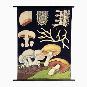 German Mushroom Wall Chart by Jung-Koch-Quintell