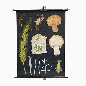 Vintage Mushroom Educational Chart